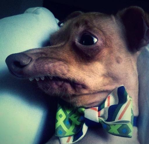 chien drole_Fotor